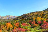 立山黒部 紅葉の弥陀ヶ原と大日連山