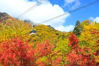 立山黒部 紅葉の黒部平と立山連峰・立山ロープウェイ  11076022519| 写真素材・ストックフォト・画像・イラスト素材|アマナイメージズ