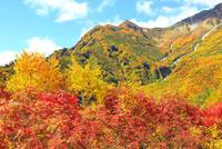 立山黒部 紅葉の黒部平と立山連峰  11076022522| 写真素材・ストックフォト・画像・イラスト素材|アマナイメージズ