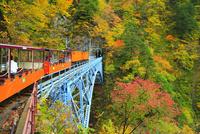 紅葉の黒部峡谷 トロッコ電車と後曳橋