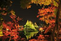 紅葉の兼六園ライトアップ