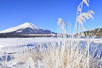 霧氷の山中湖と富士山