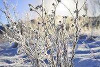 霧氷の草と太陽