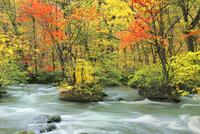 奥入瀬渓流・三乱の流れの紅葉 11076022809| 写真素材・ストックフォト・画像・イラスト素材|アマナイメージズ