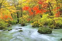 奥入瀬渓流・三乱の流れの紅葉 11076022812| 写真素材・ストックフォト・画像・イラスト素材|アマナイメージズ