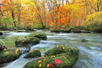 奥入瀬渓流・三乱の流れの紅葉