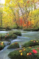 奥入瀬渓流・三乱の流れの紅葉 11076022818| 写真素材・ストックフォト・画像・イラスト素材|アマナイメージズ