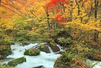 奥入瀬渓流の紅葉 11076022837| 写真素材・ストックフォト・画像・イラスト素材|アマナイメージズ