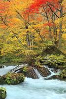 奥入瀬渓流の紅葉 11076022839| 写真素材・ストックフォト・画像・イラスト素材|アマナイメージズ