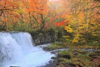 奥入瀬渓流・銚子大滝の紅葉 11076022854| 写真素材・ストックフォト・画像・イラスト素材|アマナイメージズ