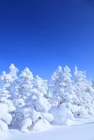志賀高原 横手山の樹氷 11076023253| 写真素材・ストックフォト・画像・イラスト素材|アマナイメージズ