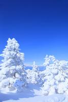 志賀高原 横手山の樹氷 11076023260| 写真素材・ストックフォト・画像・イラスト素材|アマナイメージズ