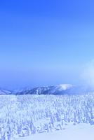 蔵王の樹氷原