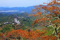 吉野山のサクラ紅葉 11076023504| 写真素材・ストックフォト・画像・イラスト素材|アマナイメージズ