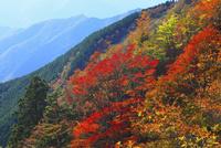 大台ヶ原山の紅葉 11076023513  写真素材・ストックフォト・画像・イラスト素材 アマナイメージズ