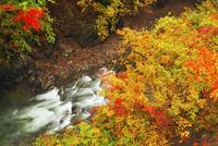 丹波渓谷の紅葉 11076023558| 写真素材・ストックフォト・画像・イラスト素材|アマナイメージズ