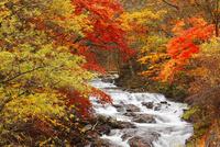 柳沢川の紅葉 11076023565| 写真素材・ストックフォト・画像・イラスト素材|アマナイメージズ