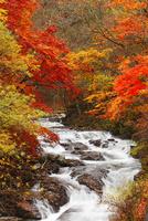 柳沢川の紅葉
