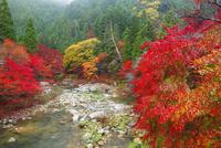 奥津渓の紅葉 11076023597| 写真素材・ストックフォト・画像・イラスト素材|アマナイメージズ