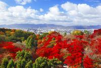 清水寺の紅葉と京都市街