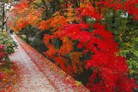 哲学の道と紅葉