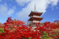 清水寺・三重塔と紅葉