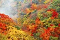 渓谷と紅葉 11076023737| 写真素材・ストックフォト・画像・イラスト素材|アマナイメージズ