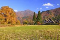秋の白川郷 11076024171  写真素材・ストックフォト・画像・イラスト素材 アマナイメージズ