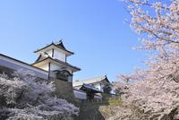 金沢城・石川門とサクラ