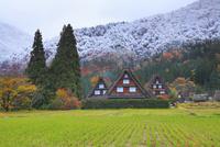 秋の白川郷・紅葉に雪