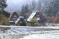 秋の白川郷・紅葉に降雪