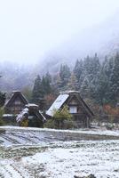 秋の白川郷・紅葉に降雪 11076024430| 写真素材・ストックフォト・画像・イラスト素材|アマナイメージズ