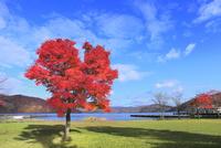 十和田湖畔の紅葉と十和田湖