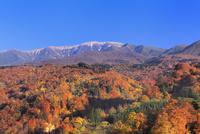 田麦俣の紅葉と月山