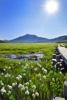 尾瀬ヶ原 ワタスゲの湿原と燧ヶ岳に太陽