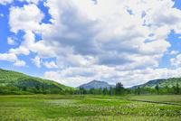 尾瀬ヶ原 ミズバショウの湿原と燧ヶ岳