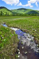 尾瀬ヶ原 ミズバショウの湿原と流れ