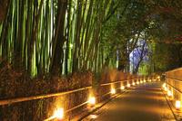 京都・嵐山花灯路 竹林の小径