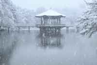 降雪の奈良公園 浮見堂 11076024967| 写真素材・ストックフォト・画像・イラスト素材|アマナイメージズ