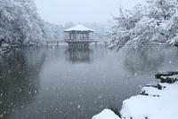 降雪の奈良公園 浮見堂 11076024968| 写真素材・ストックフォト・画像・イラスト素材|アマナイメージズ