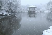 降雪の奈良公園 浮見堂 11076024969| 写真素材・ストックフォト・画像・イラスト素材|アマナイメージズ