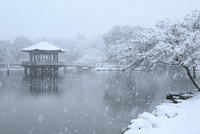 降雪の奈良公園 浮見堂