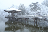 降雪の奈良公園 浮見堂 11076024974| 写真素材・ストックフォト・画像・イラスト素材|アマナイメージズ