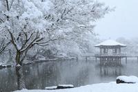 降雪の奈良公園 浮見堂 11076024976| 写真素材・ストックフォト・画像・イラスト素材|アマナイメージズ
