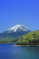 新緑の本栖湖と富士山 11076025041| 写真素材・ストックフォト・画像・イラスト素材|アマナイメージズ