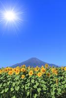 花の都公園のヒマワリと富士山 太陽と光芒 11076025155| 写真素材・ストックフォト・画像・イラスト素材|アマナイメージズ