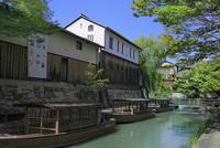 近江八幡 新緑の八幡堀