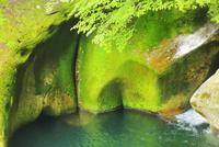 新緑の滑床渓谷
