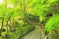 新緑の栗林公園 楓岸の苑路