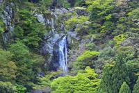 岩屋の滝と新緑
